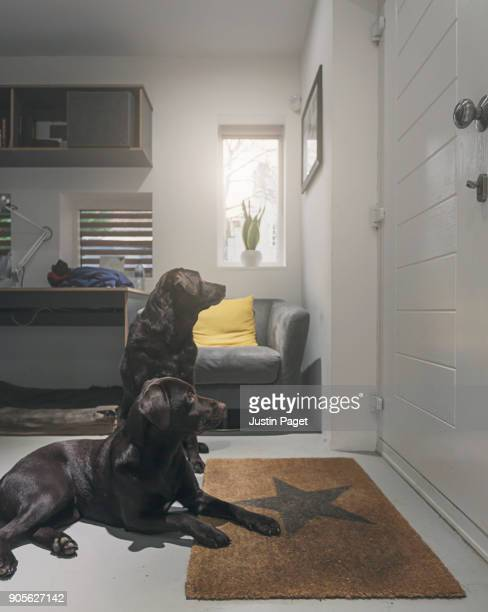 two dogs waiting by the front door - two animals stock pictures, royalty-free photos & images