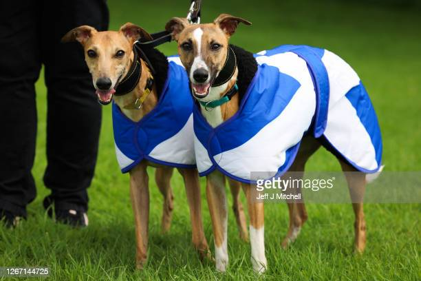 Two dogs wearing Saltire themed coats look on as supporters of Scottish independence gather at the site of the battle of Bannockburn for an 'All...
