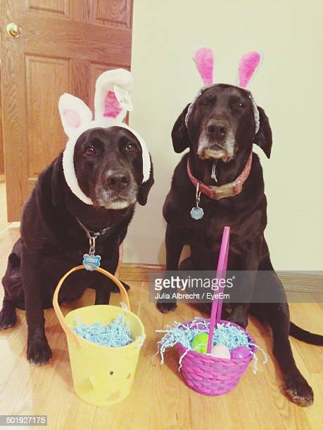 two dogs with easter egg baskets - dog easter stock pictures, royalty-free photos & images