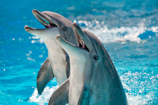 Two Dolphins in a blue water 157478834