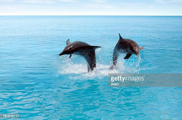 Two dolphins jumping in the ocean