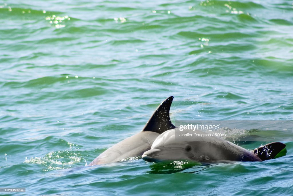 Two Dolphins : Stock Photo