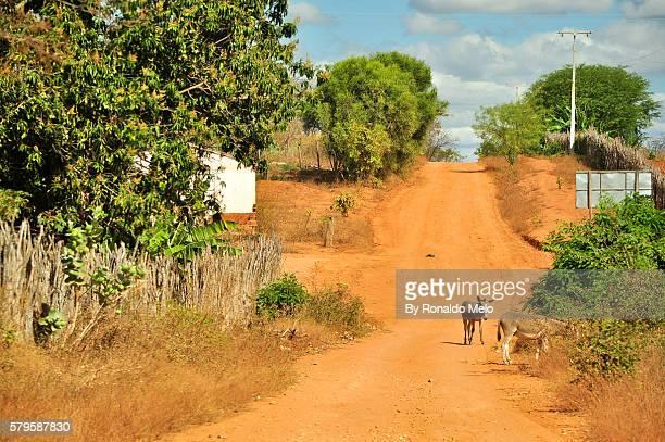 Two donkeys in a landscape typical of Northeastern Brazil, Chapada Diamantina