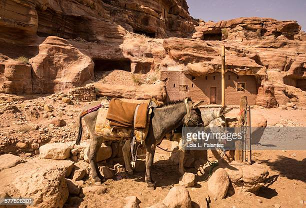 Two donkeys in Petra