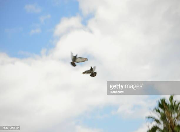 Two doves flapping a wing