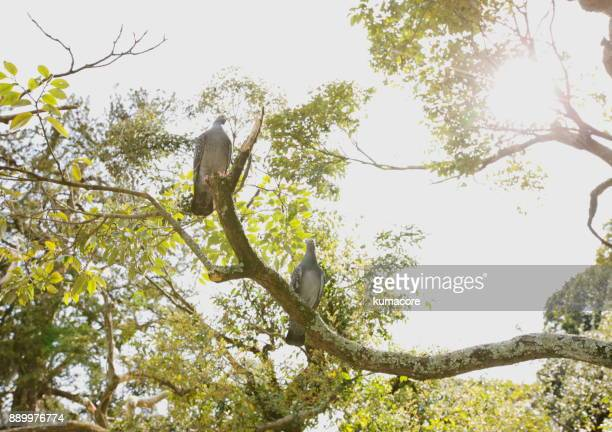 Two doves perch on the branch