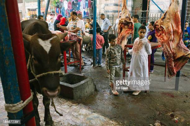 Two Egyptian boys stand in a butchers shop near a cow which is waiting for slaughter during the festival of EidalAdha or the Feast of the Sacrifice...