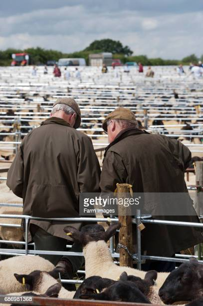 Two elderly farmers talking at a sheep sale
