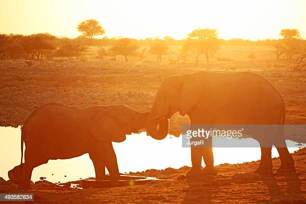 Deux éléphants toucher de bain au coucher du soleil de l'Afrique
