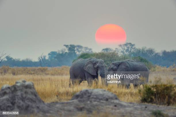 Two elephants with sunset behind.