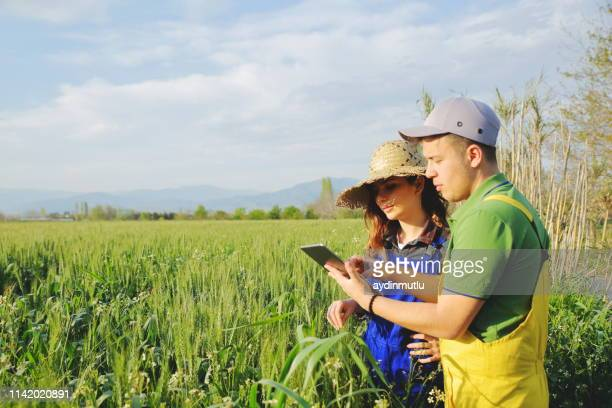 two farmer standing in a field and looking at tablet - agronomist stock pictures, royalty-free photos & images