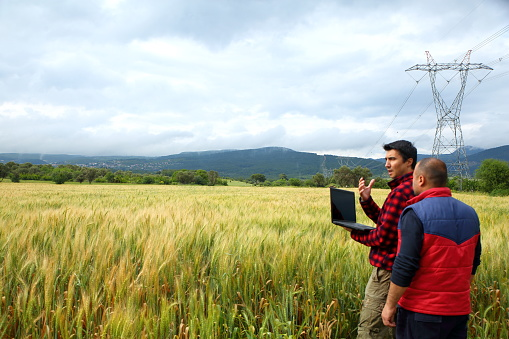 Two Farmer with laptop in wheat field 528286804