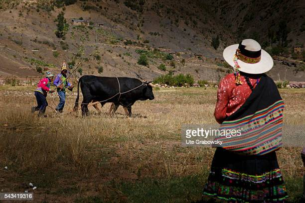 Two farmers driving oxen over a field in the Andes of Bolivia In the foreground stands a woman and observes both on April 24 2016 in Tawarchapi...