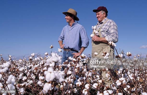 Two Farmers in Cotton Field