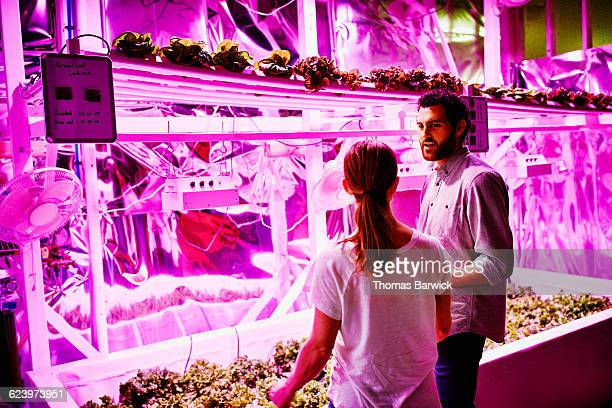 Two farmers in discussion in pink LED greenhouse