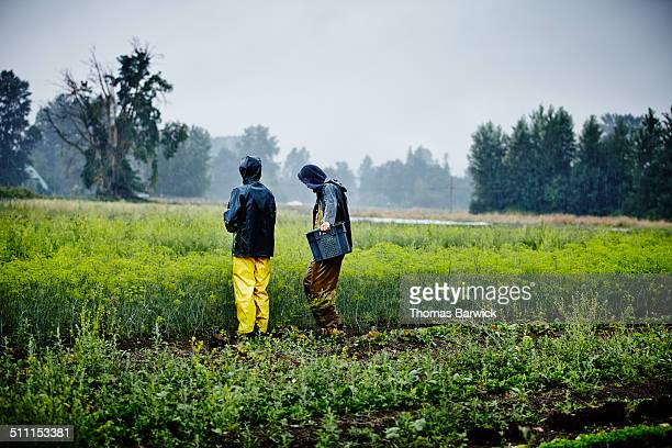 Two farmers looking out over field of fennel