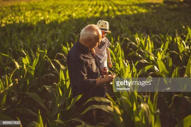 dois fazendeiros na fazenda de milho - agricultor - fotografias e filmes do acervo