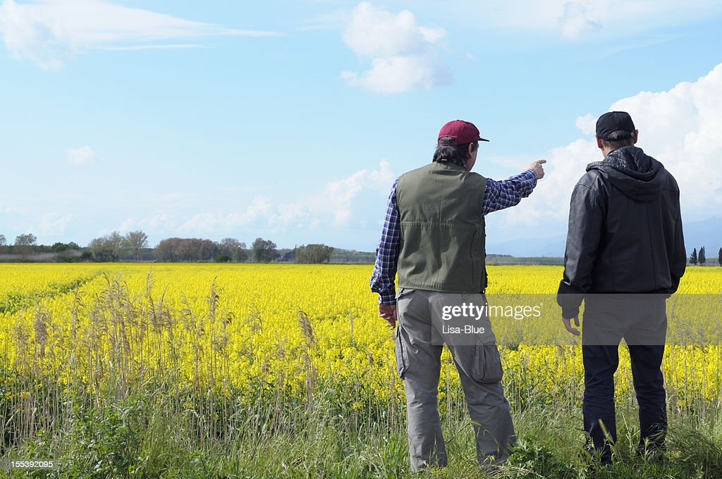 Two Farmers Pointing Canola Field : Stock Photo