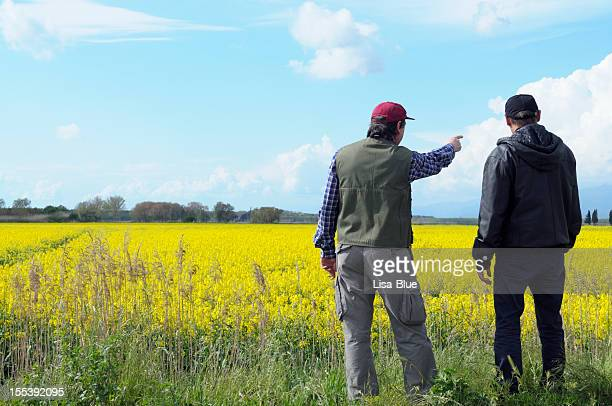 two farmers pointing canola field - agronomist stock pictures, royalty-free photos & images