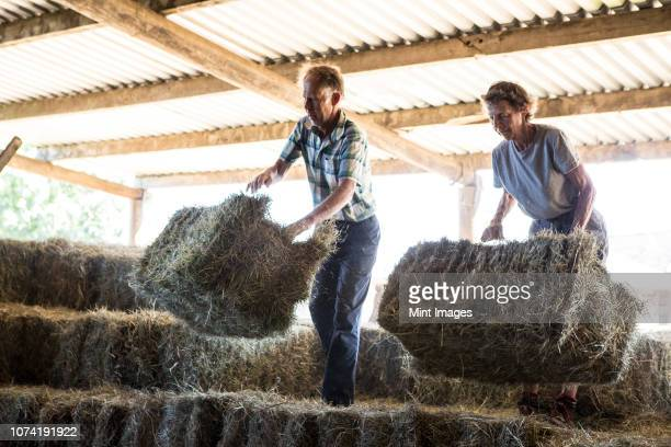 two farmers stacking hay bales in a barn. - wife stock pictures, royalty-free photos & images