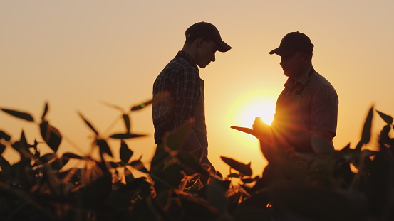 Two farmers talk on the field. Use a tablet 1127980059