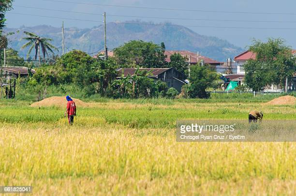 two farmers working in field - filipino farmer stock photos and pictures