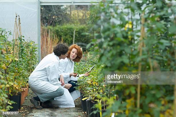 two female scientists controlling plants in a greenhouse - wissenschaftlerin stock-fotos und bilder
