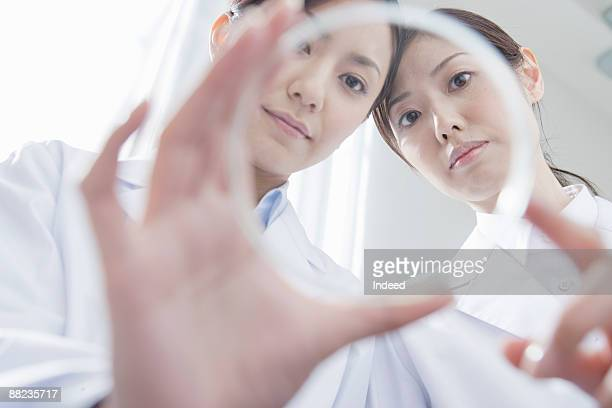Two female scientists looking at petri dish