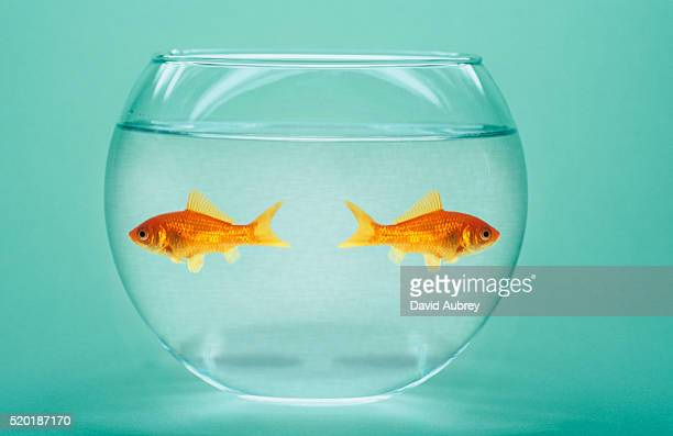 two fish in a bowl - avoidance stock pictures, royalty-free photos & images