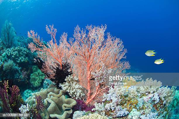 two fish in coral reef, underwater view - reef stock pictures, royalty-free photos & images