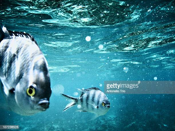 two fish in the sea - insel mauritius stock-fotos und bilder