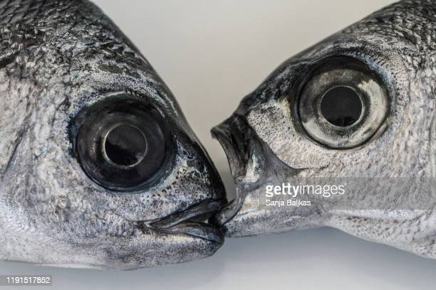 two fish open mouth - animal eye stock pictures, royalty-free photos & images