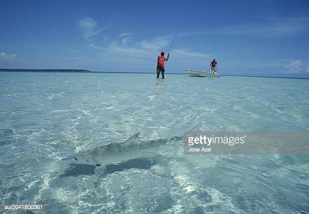 Two fishermen fishing in the ocean as a bonefish swims across, Florida, USA.