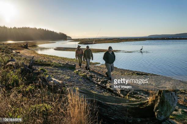 two fly fisherman and a guide walk  past a great blue heron along a salt water beach estuary while fishing for searun coastal cutthroat trout and salmon at indian island in northwest washington state, usa. - puget sound stock pictures, royalty-free photos & images