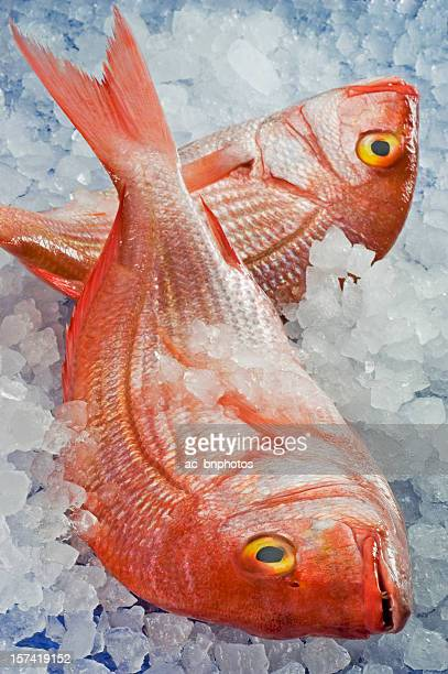 two fresh pagellus erythrinus on ice - redfish stock photos and pictures