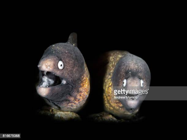 Two funny eels in a dark hole