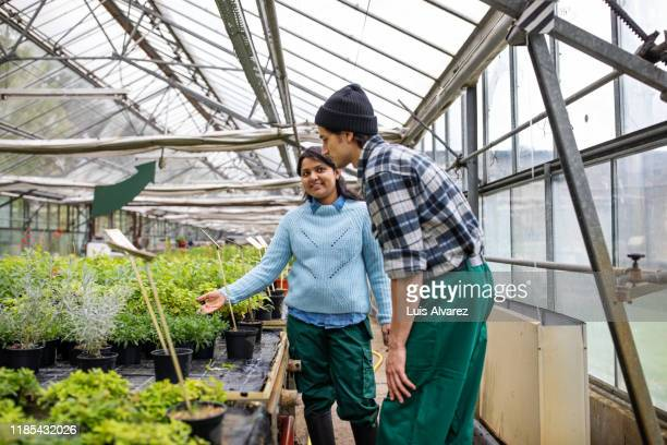two garden workers working in greenhouse - printed sleeve stock pictures, royalty-free photos & images