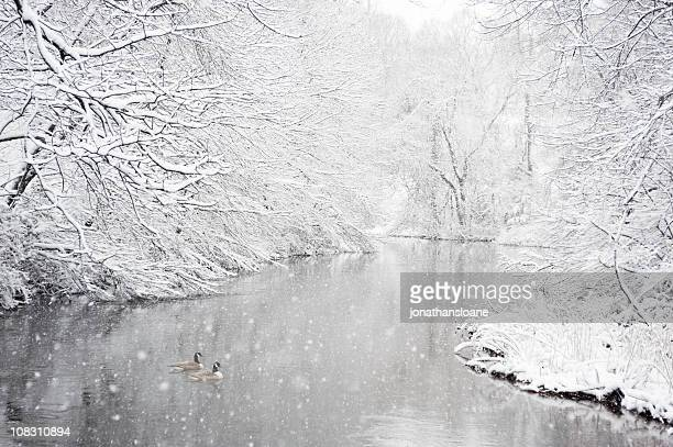 Two geese in a river during snowstorm