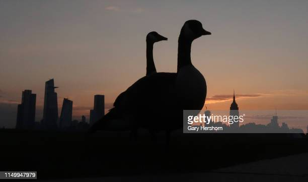 Two geese stand in front of the Empire State Building and Hudson Yards in New York City as the sun rises on May 17 2019 as seen from Hoboken New...
