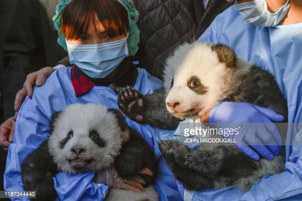 """Two giant panda cubs """"Meng Yuan"""" and """"Meng Xiang"""" are presented to the media after they were given their names at the Zoologischer Garten zoo in..."""