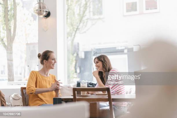 two girlfriends meeting in a coffee shop, talking - nur frauen stock-fotos und bilder