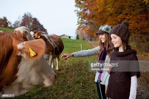 two girls at a pasture with cows - stefanie grewel stock-fotos und bilder