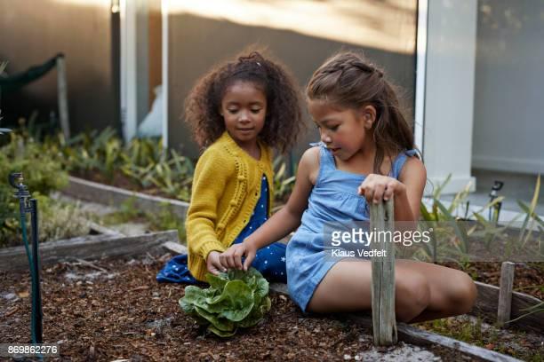 Two girls exploring salat in vegetable garden
