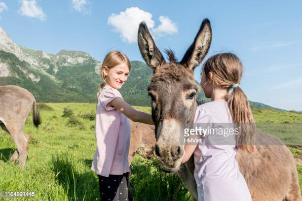 two girls feeding and caressing donkey on the mountain pasture - only girls stock pictures, royalty-free photos & images