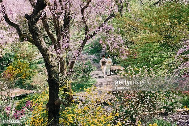 Two girls in kimono walk in japanese garden with sakura .