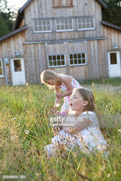 two girls (6-8) in tall grass, one girl blowing seeds from dandelion - bending over in skirt stock pictures, royalty-free photos & images