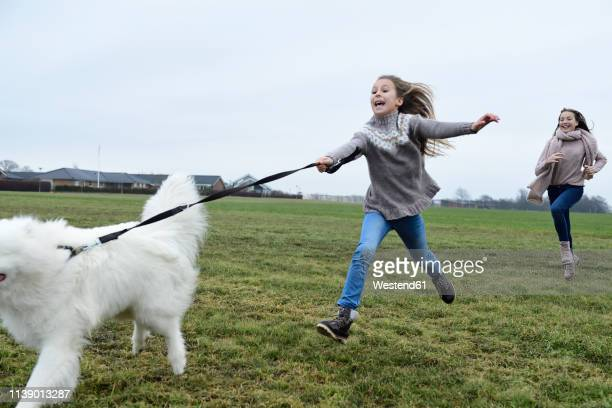 two girls running on a meadow with  dog having fun - pet lead stock pictures, royalty-free photos & images