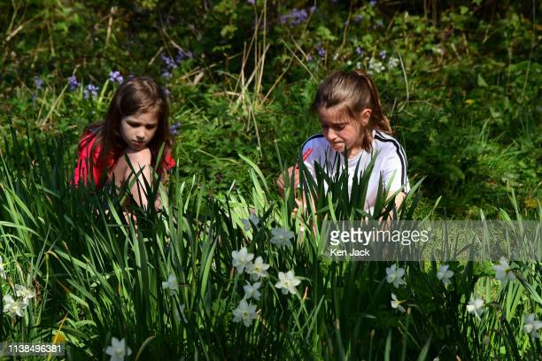 Two girls sit in the sun amidst woodland flowers on Easter Sunday on April 21 2019 in Edinburgh Scotland