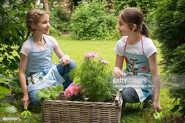 two girls with flowers in a basket planting together - alexandra dost stock-fotos und bilder