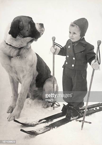 Small boy as a passionated skier and on his side a wakefully Saint Bernard. Photograph. About 1930 Zwei gute Skikameraden: Ein kleiner Bub als...